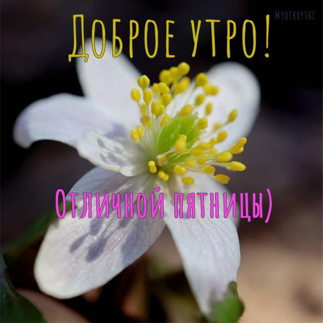 доброе утро пятница весна